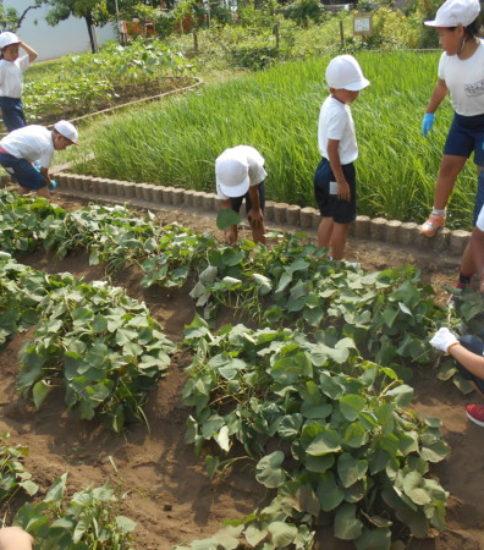 野菜の成長のため、ファイト!