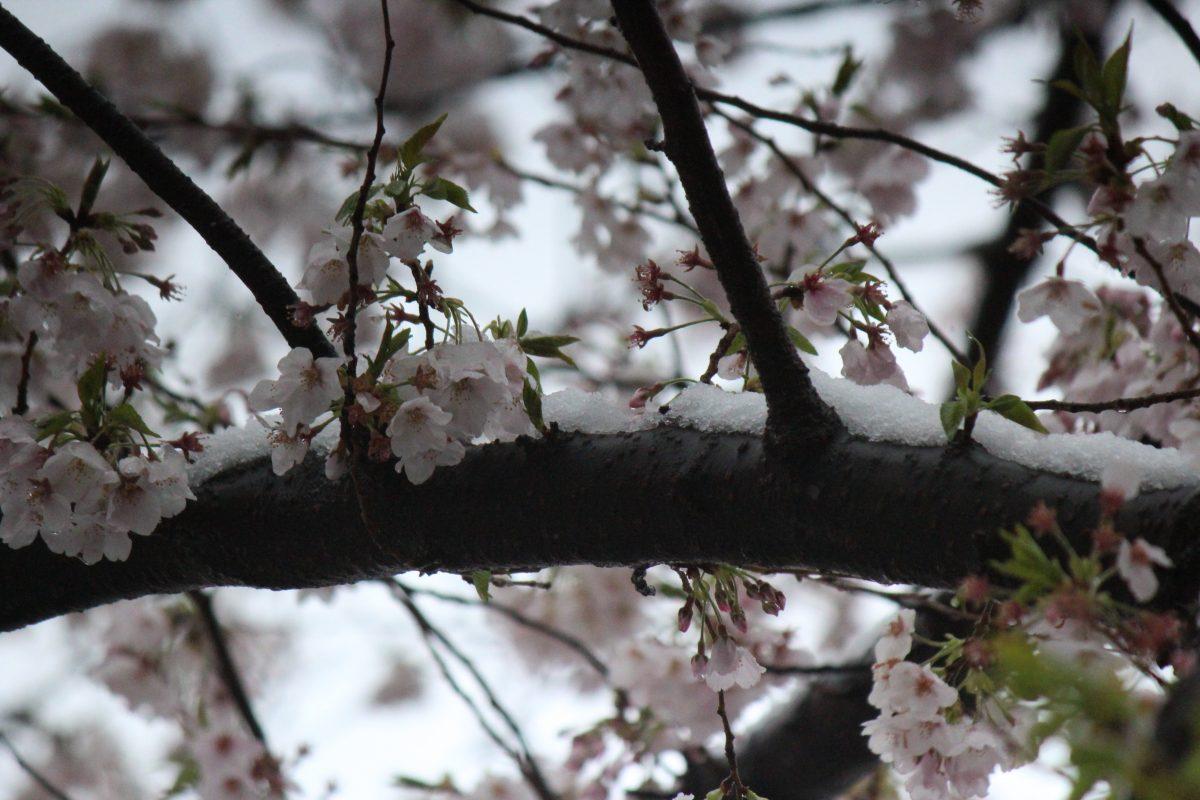 芝富士の4月